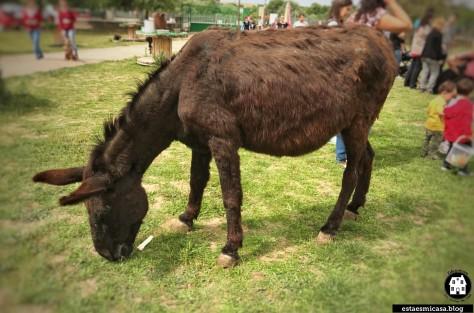 burro-en-burrolandia