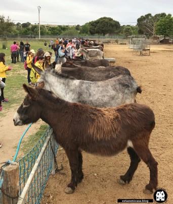 burros-en-burrolandia