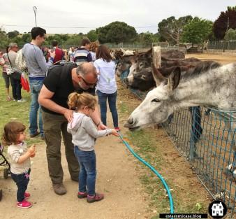 burros-en-burrolandia_