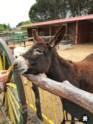 otro-burro-en-burrolandia1